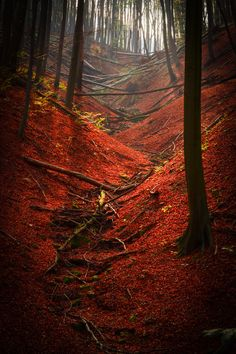 Autumn forest, Hungary, by Gabor Gonczol