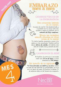 """infografía para pinterest NecBB """"El embarazo mes a mes"""" (Mes 4)"""
