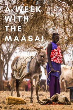 What is it like spending a week in a Maasai village in northern Tanzania? : What is it like spending a week in a Maasai village in northern Tanzania? Kenya Travel, Africa Travel, Chobe National Park, Africa Destinations, Travel Destinations, Travel Guides, Travel Tips, Travel Articles, Travel Advice
