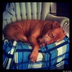 Writer pens moving letter to his rescued Dog's previous owners, via Craigs List. #pitbull #youcanthaveherback #20catherinestreet #newyork