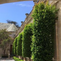 GLORIOUS GREYSTONE - Mark D. Sikes: Chic People, Glamorous Places, Stylish Things