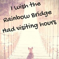 22 trendy Ideas for dogs love quotes rainbow bridge Yorkshire Terrier, I Love Dogs, Puppy Love, My Little Beauty, Animals And Pets, Cute Animals, Pet Loss Grief, Motivacional Quotes, Pet Loss Quotes