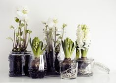 Spring decor with mini onion flower garden in a glass jar - cool-floral-decoration-white-with-onion-flowers-in-jars - Deco Floral, Arte Floral, Onion Flower, Christmas Flowers, Winter Flowers, Spring Flowers, Winter Plants, Winter Garden, Weekend Projects