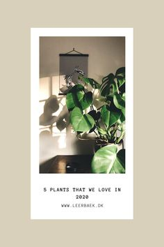 Which plants will be popular in 2020? Planters, Popular, Blog, Popular Pins, Blogging, Plant, Window Boxes, Pot Holders, Flower Planters