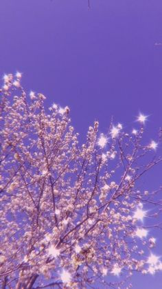 lilac backdrop wit baby pink blooming blossom and sparkles ✨ Look Wallpaper, Purple Wallpaper Iphone, Iphone Wallpaper Tumblr Aesthetic, Iphone Background Wallpaper, Retro Wallpaper, Aesthetic Pastel Wallpaper, Aesthetic Backgrounds, Aesthetic Wallpapers, Wallpaper Quotes