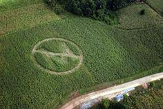 Monsanto employee speaks out