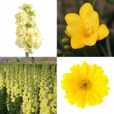 A brilliant package of monochromatic yellow DIY wedding flowers from The Grower's Box (www.GrowersBox.com). Stock, Freesia, Snapdragons and Gerbera Daisies come together to provide ample flowers for decorating for weddings and events.