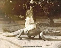 Have you a ever seen a girl riding a crocodile or a man riding a lion? Then you must see these photos. Have you a ever seen a girl riding a crocodile or a man riding a lion? Old Photos, Vintage Photos, Vintage Photographs, Foto Picture, Crocodile Dundee, Hungry Crocodile, Saltwater Crocodile, Anime Meme, Crocodiles