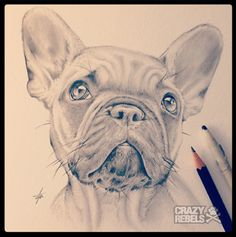 The sweetest little frenchie face! Hand drawn.