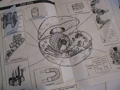 The cell lesson and activity page from Considering God's Creation helped us to understand each part of an animal cell and its function.