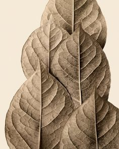 ( shades of brown and beige )---Leaves. ( Photography by Jeff Friesen) Patterns In Nature, Textures Patterns, Plant Texture, Leaf Texture, Stoff Design, Shades Of Beige, Dry Leaf, Illustration, No Photoshop