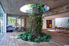 A tree grows inside the home  - Creative Homes Built Around Trees
