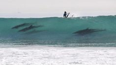 Surfing With Dolphins in Santa Barbara