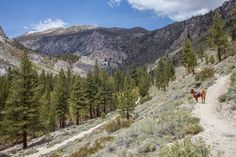 Hiking the North Fork of Big Pine | CaliTrails