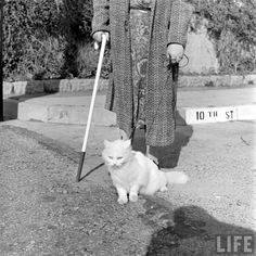 On a mission… | Community Post: In 1947 This Lady Had A Seeing Eye Cat