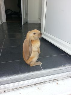 Ears!! So cute