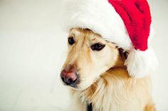 Santa Christmas Dog
