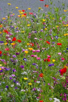 Wild Flower Meadow, Meadow Flowers, Wild Flowers, Hummingbird Garden, Real Plants, Prado, Champs, Beautiful Landscapes, Flower Power
