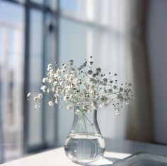baby's breath in mini vase. White Flowers, Beautiful Flowers, Simply Beautiful, Flowers Vase, Deco Floral, Floral Lace, Flower Aesthetic, Deco Table, Still Life Photography