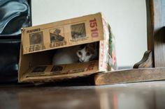 https://flic.kr/p/C1nUj1 | 箱猫 | Box cat