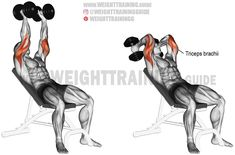 Incline dumbbell triceps extension. An isolation exercise. Target muscle: Triceps Brachii. Synergists: None.
