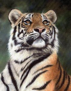 Amur Tiger Painting Print By Rachel Stribbling. Wildlife Art / Animal Art.