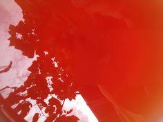 © organisch und bio | art und werk.  #red #reflexion #rotöl #johanniskrautöl  www.art-und-werk.de