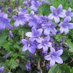 Les 8 Meilleures Images De Parterre Bonica Jardins Fleurs Et