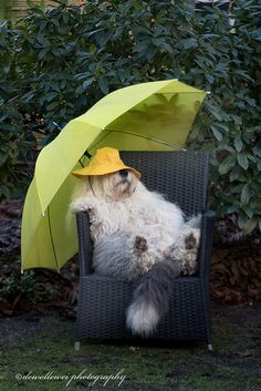 just hangnig out in the rain....