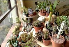 Overwintering my Cacti & Succulents in my home & Before & After Plant Tour Cacti And Succulents, Planting Succulents, Plantas Indoor, Overwintering, 70s Home Decor, Nature Gif, Desert Plants, Cactus Y Suculentas, Front Yard Landscaping