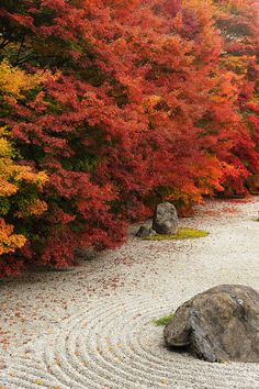 Zen garden in autumn, Kyoto, Japan Here the space is for looking, meditating and gardening but not very functional beyond that.