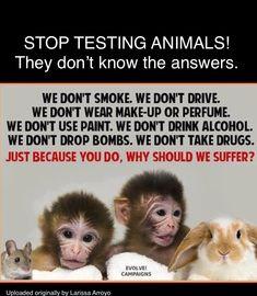 Stop Animal Testing, Stop Animal Cruelty, Vegan Quotes, Why Vegan, Save Animals, Animal Quotes, Save The Planet, Animal Welfare, Animal Rights