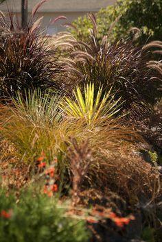bob hyland Yucca by sweber4507, via Flickr