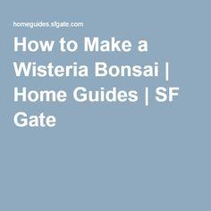 How to Make a Wisteria Bonsai | Home Guides | SF Gate