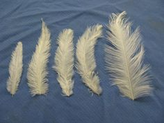 feathers | White_rhea_body_and_wing_cover_feathers.jpg (40980 bytes)