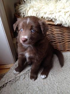 Border Collie shared by LC on We Heart It