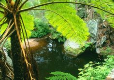 Fern Tree Pool is a fine example of the quiet, shaded side-gorges that feed water into Three Moon Creek. Photo: R Ashdown, NPRSR