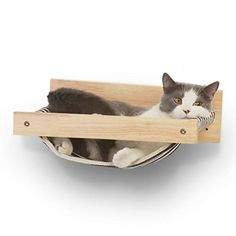 Cat Climbing Shelves, Cat Climbing Wall, Diy Cat Hammock, Diy Cat Bed, Diy Cat Shelves, Gato Grande, Cat Hacks, Cat Perch, Wood Cat