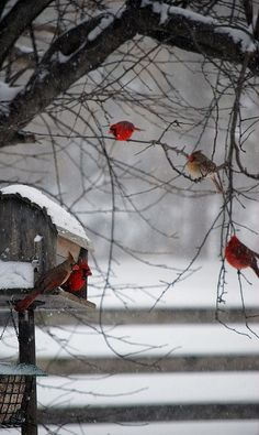 Winter Stimmung ...