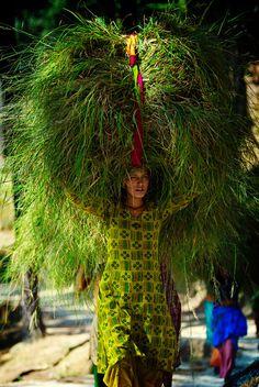 lunacylover: India.  Mujer llevando hierba comprado en un mercado que se utiliza como alimento para el ganado, Kumaon.  Foto: Michael Gebicki