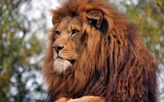 2560x1600 free screensaver wallpapers for lion