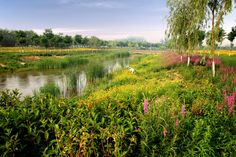 turenscape sanlihe river ecological corridor 10 « Landscape Architecture Works | Landezine