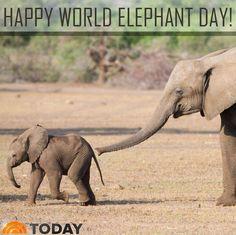 Happy World Elephant Day!