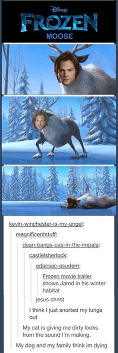Sam as moose