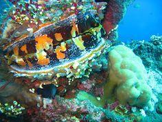 Diving USS Liberty at Tulamben, Bali