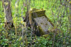 Friedhof Lindener Berg (83)