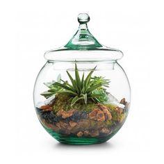 Mini garden in a globe - Valentines Day gifts for boyfriend.