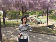 The Wisteria Beauty at Kazahaya No Sato