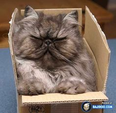#4 of Cats In Boxes (It's so squishy in here!)