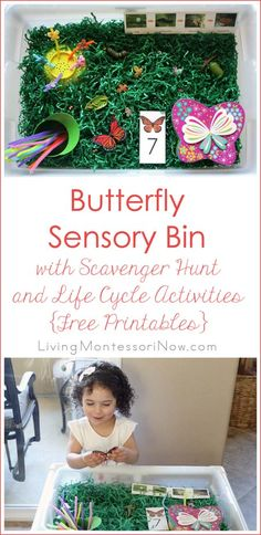 This butterfly sensory bin for toddlers and preschoolers uses free printables and butterfly figures for life cycle, fine-motor, and math activities.